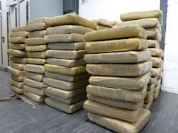 PSNI seize £1 million worth of cannabis in Lisburn