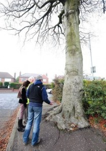 Belfast's oldest tree given a six month reprieve from the chop