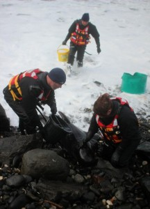 DoE staff tend to the young pilot whale which got stranded at Portballintrae