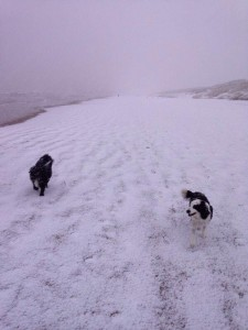 Dogs enjoying the snow on Portstewart Strand