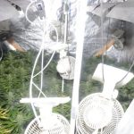 Cannabis plants and drugs paraphernalia found during police searches in Castlewellan