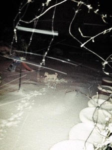 'Spot The Dog' in the snow?