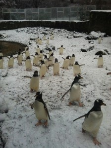 Penguins feelling right at home in Belfast Zoo