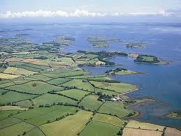 Marine life feeling heat from rise in temperatures in Strangford Lough