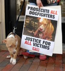Police warn pet pooches being stolen for bait in dog fighting