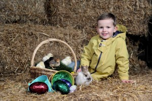 Little Logan Montgomery enjoys a day out at Streamvale Farm in Dundonald which is reopening for spring with its Baby Animal Farm from March 22 – April 7.