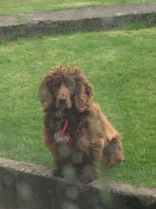 Family appeal for help in tracing their pet dog Duke