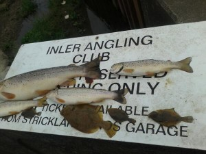 The wild brown trout killed by pollution on the River Enler in Comber, Co Down