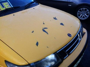 One of the cars damaged with acid at the dealership