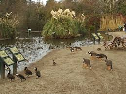 Castle Espie Wildfowl Centre in Comber, Co Down