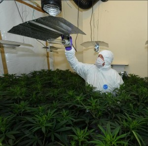 Police uncover 'sophisticated' cannabis factory
