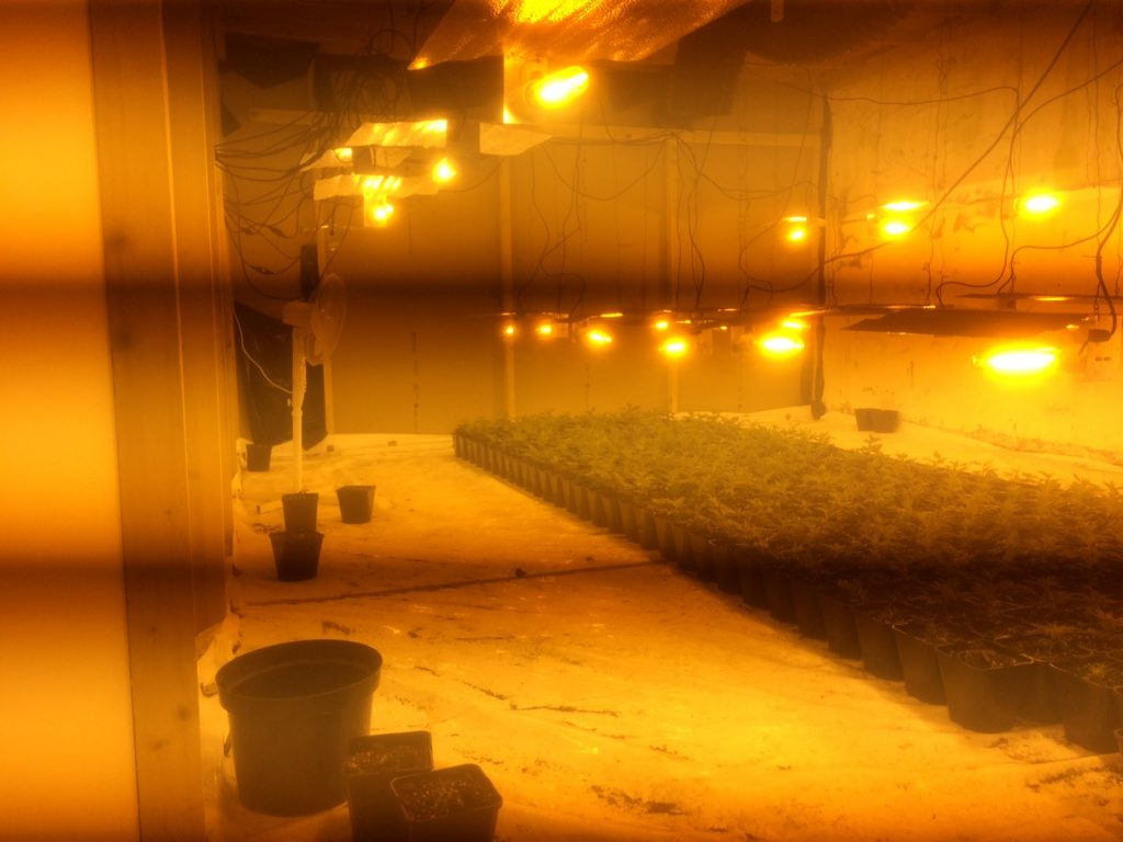 The cannabis plant factory uncovered in Co Down by police