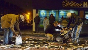 People collecting the shed load of mackerel in east Belfast