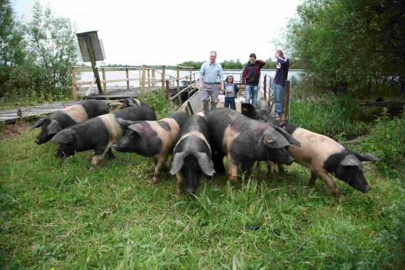 Fermanagh's famous black bacon